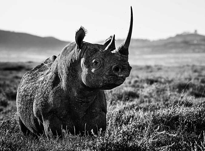 Kifaru by David Yarrow