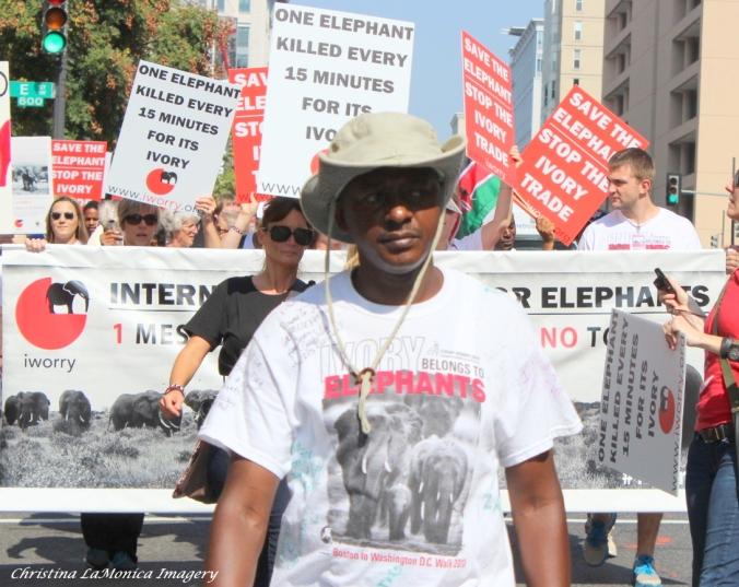 Walking for Elephants with Jim Justus Nyamu.