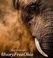 Ivory Free Ohio